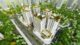 phoi-canh-chung-cu-eco-smart-city-co-linh